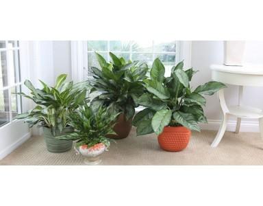 10 گیاه خانگی برای کاهش آلودگی هوا در منزل